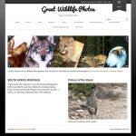Great Wildlife Photos Thumbnail